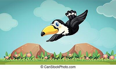 οπωροφάγο πτηνό με μέγα ράμφο , ιπτάμενος , ουρανόs