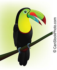 οπωροφάγο πτηνό με μέγα ράμφο , πουλί