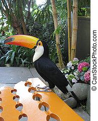 οπωροφάγο πτηνό με μέγα ράμφο , πουλί , επάνω , πορτοκάλι , πάγκος