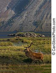 ορεινή περιοχή , σκωτσέζικο