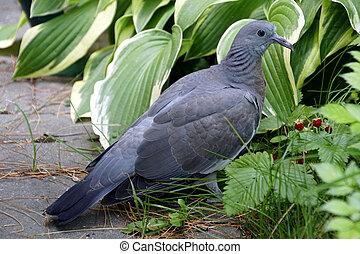 8 ίντσες πουλί εικόνεςMILFs μοιράζονται μεγάλο καβλί