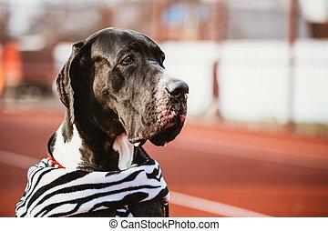 πάνω , δανόs , σπουδαίος , dog., κλείνω , μεγάλος