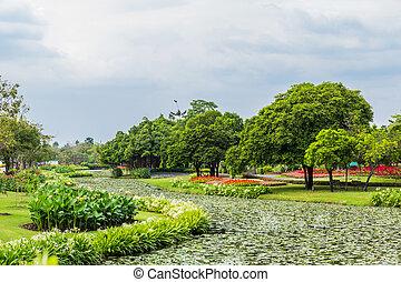 πάρκο, γρασίδι, δέντρα