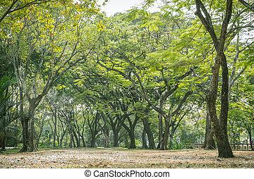 πάρκο , δέντρα