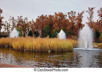 πάρκο , λιμνούλα , autumn., βουτώ