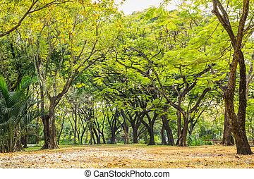πάρκο , με , δέντρα