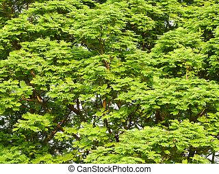 πάρκο , φύλλο , βγάζω κλαδιά , δέντρο
