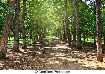 πάρκο , allee, καλοκαίρι , δέντρα