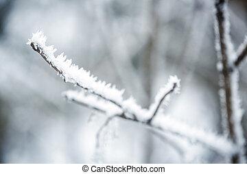 πάχνη , βγάζω κλαδιά , χειμερινός αγχόνη
