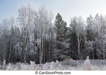 πάχνη , δέντρα