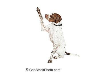 πέλμα ζώου , σκύλοs , αβοήθητος 5 , δείκτης , αίρω