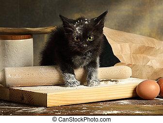 παιγνιδιάρης , αλεύρι , γατάκι , τσάντα , μικρό , μαύρο , ...