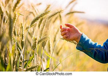 παιδί , αγγίζω ακάλυπτος , να , άγγιγμα , νέος , σιτάρι