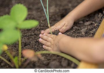 παιδί , φύτεμα , ένα , ανώριμος απάτη , νεαρό φυτό
