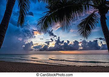 παλάμες , ηλιοβασίλεμα
