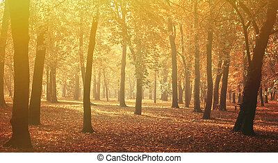 πανόραμα , φθινόπωρο