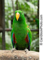 παπαγάλος , πουλί