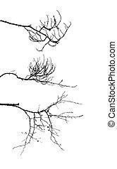 παράρτημα , δέντρο , φόντο , περίγραμμα , άσπρο