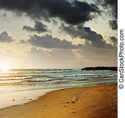 παραλία , άθυμος