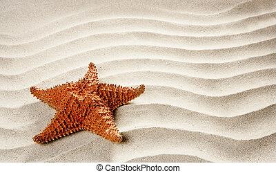 παραλία , άσπρο , κυματιστός , άμμοs , αστερίας , ακμή άδεια