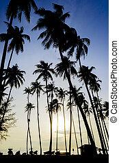 παραλία , ανατολή