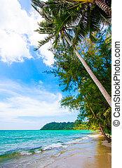 παραλία , βάγιο , sea., τροπικός , όμορφος