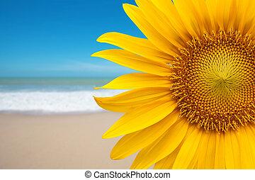 παραλία , ηλιοτρόπιο