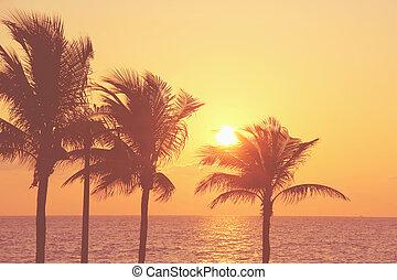 παραλία , πίσω , βάγιο , ανατολή , δέντρα