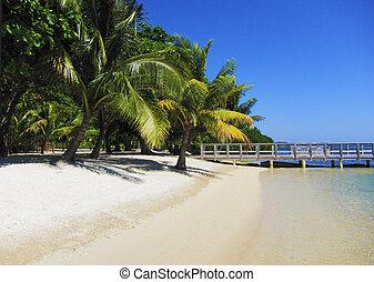 παραλία , παλάμες