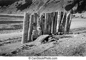 παραλία , scotia , nova, driftwood