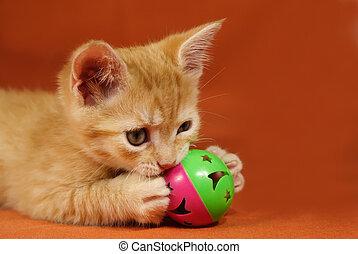 παρδαλή ραβδωτή γάτα , γατάκι