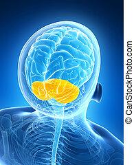 παρεγκεφαλίτιδα