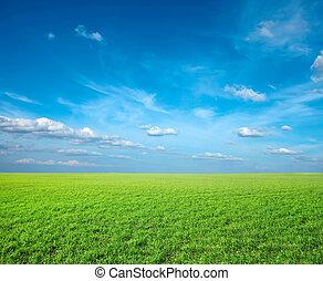 πεδίο , από , πράσινο , φρέσκος , γρασίδι , κάτω από , γαλάζιος ουρανός