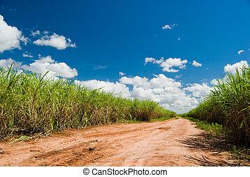 πεδίο , καλάμι , δρόμοs , ζάχαρη άχνη