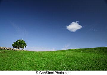 πεδίο , πράσινο
