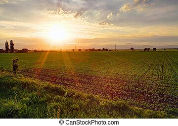 πεδίο, πράσινο, ηλιοβασίλεμα