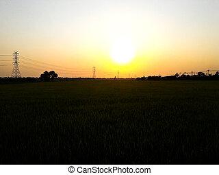 πεδίο , ρύζι , ηλιοβασίλεμα