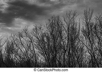 περίγραμμα , άγονος αγχόνη , επάνω , σκοτάδι , δραματικός , ανιαρός κλίμα , και , θαμπάδα , φόντο , για , έντρομος , θάνατος , και , ειρήνη , concept., παραμονή αγίων πάντων , ημέρα , φόντο. , τέχνη , και , δραματικός , επάνω , μαύρο και , white., απελπίζομαι , και , απελπισμένος , concept.