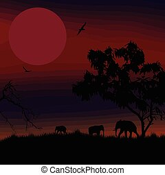 περίγραμμα , ελέφαντας , ηλιοβασίλεμα , αφρικανός , κόκκινο , σαβάνα