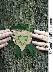 περιβάλλοντος διατήρηση , δέντρο
