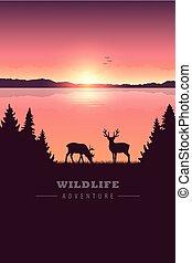 περιπέτεια , έλαφος άλκη , λίμνη , άγρια ζωή , ερημιά , ηλιοβασίλεμα