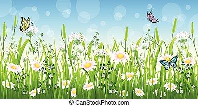 πεταλούδα , καλοκαίρι , λουλούδι , λιβάδι
