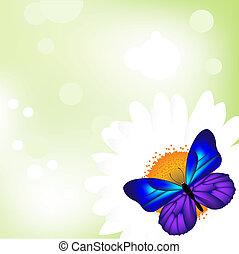 πεταλούδα , camomile