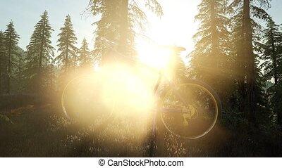 ποδήλατο , μέσα , βουνό , δάσοs , σε , ηλιοβασίλεμα