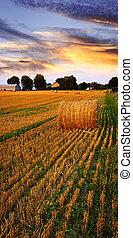 πολύτιμος δύση , πάνω , αγρόκτημα αγρός