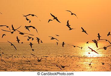 πορτοκάλι , ιπτάμενος , πουλί , εναντίον , sunset.