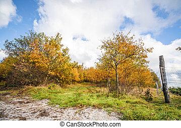 πορτοκάλι , μπογιά , δέντρα , φράκτηs , πέφτω