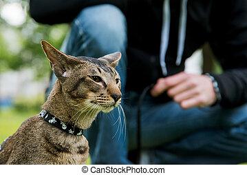πορτραίτο , γάτα , υπαίθριος , ανακριτού αδιαπέραστος