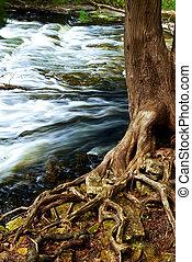 ποτάμι , διαμέσου , δασάκι