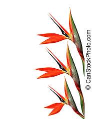πουλί από επίγειος παράδεισος , λουλούδι , 123